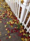 Fall leaves on the sidewalk Stock Photo