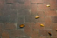 Leaves on brick in fall. Fall leaves sitting on a old brick path Royalty Free Stock Photos
