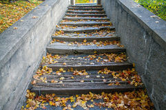 Fall leaves on the steps Royalty Free Stock Image