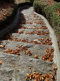 Fall leaves on the stone steps Stock Photography
