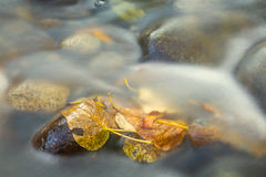 Fall Leaves In Stream Stock Photos