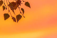 Fall leaves in the sunset Stock Photography