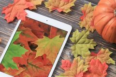 Fall leaves with tablet. Colorful fall leaves with pumpkin and tablet with leaf wallpaper royalty free stock image
