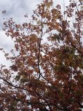 Fall leaves. Taken in Las Cruces Stock Image