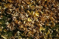 Fall leaves background. Fall leaves texture autumn background stock photos