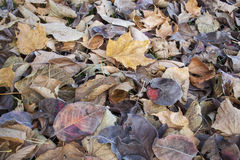 Fall leaves texture background Royalty Free Stock Photo