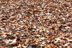 Fall leaves texture Stock Image