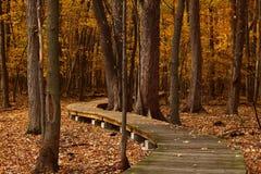 Fall, Leaves, Trail, Foliage Stock Photos