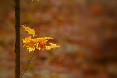 Fall leaves on a tree stem Stock Photography
