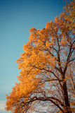 fall leaves trees Royalty Free Stock Photo
