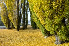 Fall leaves trees Stock Image