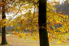 Fall leaves trees at park Royalty Free Stock Photography