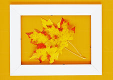 Fall leaves. Royalty Free Stock Image