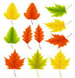 Fall leaves vector collection. Set of autumn leaves like maple and oak. With different colors isolated in white background. Vector illustration Stock Photography