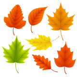 Fall leaves vector set for autumn season and seasonal elements with maple and oak. Leaf in different colors isolated in white background. Vector illustration royalty free illustration