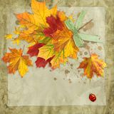 Fall leaves vintage background Royalty Free Stock Image