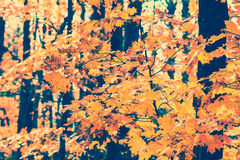 Fall Leaves - Vintage Stock Images