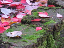 Fall leaves on wall. Red and yellow leaves on green moss covered black stone wall royalty free stock photo