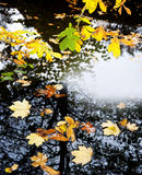 Fall leaves on a water Stock Photography