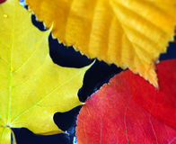 Fall leaves in water Royalty Free Stock Photography