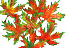 Fall Leaves Watercolor Stock Image