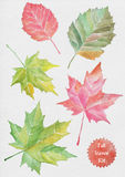 Fall Leaves watercolor illustration Royalty Free Stock Photography