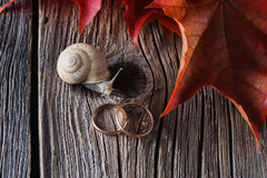 Fall on leaves on weathered table with wedding rings Royalty Free Stock Photography