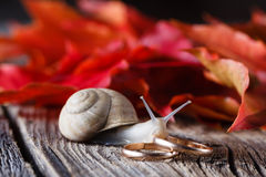 Fall on leaves on weathered table with wedding rings and snail Royalty Free Stock Images