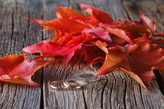 Fall on leaves with wedding rings Royalty Free Stock Photography