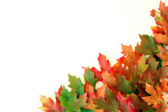 Fall Leaves on White. Autumn leaves on white background on border of photo Stock Photo