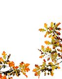 Fall Leaves on White Royalty Free Stock Photos