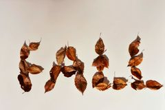 Fall Leaves On White Background Concept. Dry Fall leaves forming the word fall on a white background, season concept royalty free stock photography