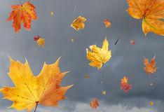 Fall leaves in the wind. Dry autumn leaves swept up in gust of wind against stormy sky Royalty Free Stock Photos