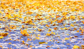 Fall Leaves Winter Snow Stock Image