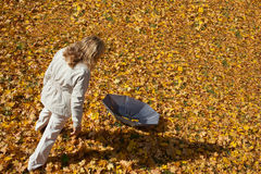 Fall of leaves. Stock Images
