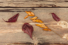 Fall leaves on wood. Royalty Free Stock Photos