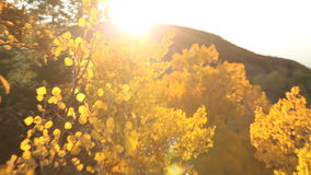 Fall Leaves Zoom Out stock footage