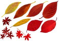 Fall_leaves02 Stock Fotografie