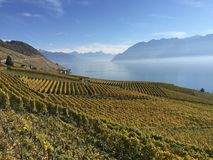 Lavaux, UNESCO, vineyards, Epesses, Switzerland. Fall light vineyards Lavaux UNESCO, Epesses, Switzerland. Wine country. Lake Geneva Stock Images