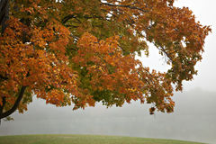 Fall limbs in fog Stock Photography