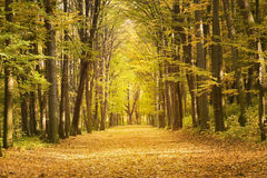 The fall in lime aley Stock Photography