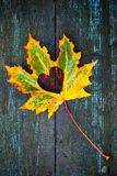 Fall in love photo metaphor. Colorful maple leaf with heart shaped hole lays on dark wooden table Stock Images