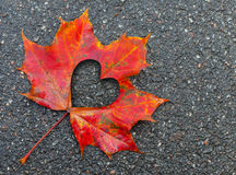 Fall in love photo metaphor with maple leaf. Fall in love photo metaphor. Red maple leaf with heart shaped hole lays on dark asphalt road Stock Photo