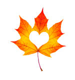 Fall In Love Photo Metaphor. Red Maple Leaf With Heart Shaped is. Olated on white Stock Photo