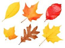 Fall lässt Sammlung lokalisiert Herbst Lizenzfreies Stockbild