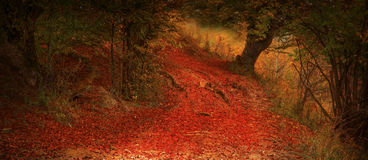 Fall magic misty road in the forest Stock Photos