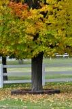 Fall Maple Stock Photos