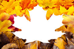 Fall maple, hawthorn and viburnum  leaves. Background Royalty Free Stock Images