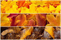 Fall maple, hawthorn and viburnum  leaves. Background Stock Photo