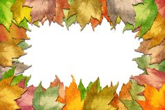 Fall maple leaf border Stock Images